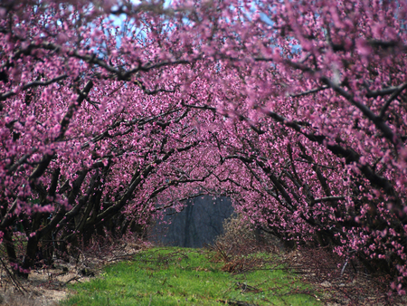 Flower Trees Forests Nature Background Wallpapers On