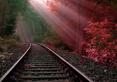 Burning bush - forest, rail, bush, hot, tracks, red