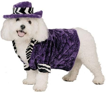 PIMP HALLOWEEN COSTUME - purple, costume, halloween, dog, cute