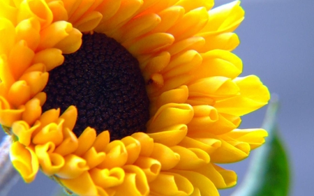 Decorative-sunflower - sunflower, yellow, 3d, flower