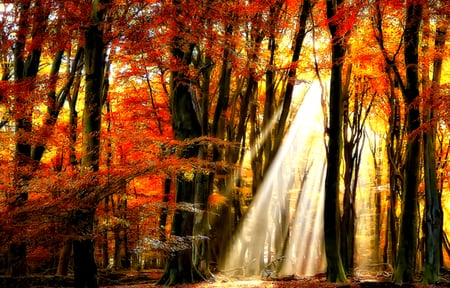 Autumn - grass, sunlight, peaceful, magic, sun, forest, autumn, colors, splendor, autumn leaves, sunrays, nature, fall, woods, beauty, beautiful, lovely, rays, pretty, view, autumn colors, leaves
