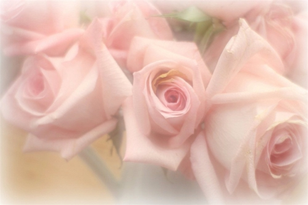 Soft pink flowers nature background wallpapers on desktop nexus soft pink mightylinksfo