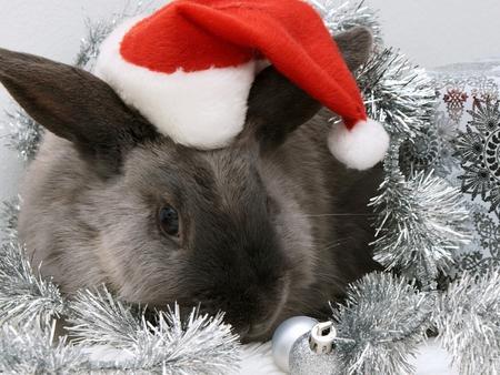 Christmas bunny - animal, bunny, christmas, holiday, hat, santa