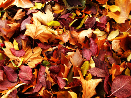 autumn-carpet - leaf, fall, colorful, forest, autumn, view, season, leaves, beautiful, carpet, nature