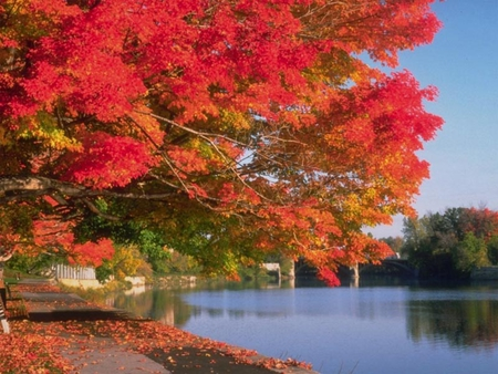 Fall Time - peaceful, fall, nature, lake