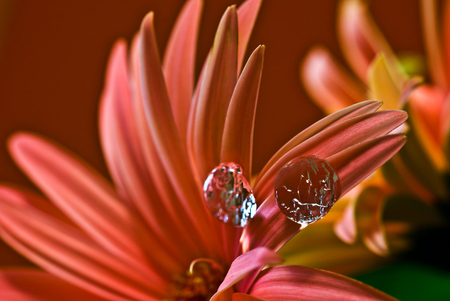 Drops - flower, nature, beautiful, drops