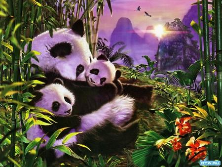Panda bear sunrise - Bears & Animals