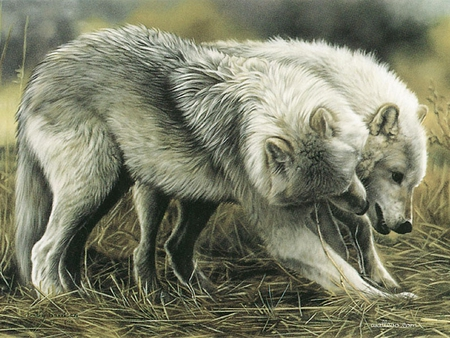 wolf's love - wolfs, paintings, love, wolves, wolfs love