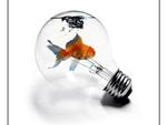 Goldfish in Lightbulb