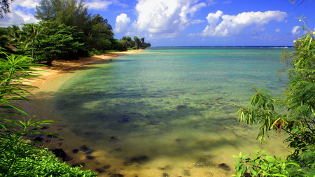 Beach and trees - beach, water, green, trees, clouds, sky, blue