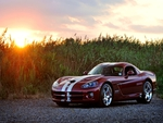 Beautiful Viper