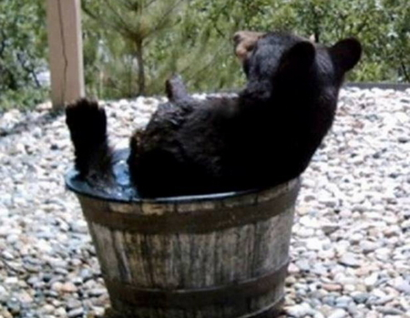 Bathing Bear Bears Amp Animals Background Wallpapers On