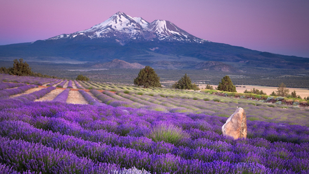 Purple Fields - flowers, purple, purple sky, fields, mountains, trees