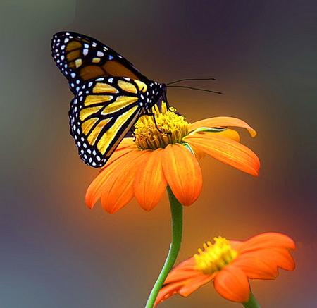 Aninimal Book: Orange glow - Butterflies & Animals Background Wallpapers ...