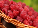 Fresh Raspberries for my friends