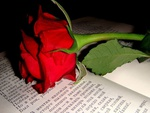 Love story and red rose