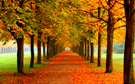 Autumn Colors - colorful, grass, peaceful, walk, romantic, tree, path, alley, way, autumn, colors, splendor, autumn leaves, nature, trees, fall, carpet, beauty, beautiful, lovely, carpet of leaves, romance, pretty, green, view, autumn colors, leaves
