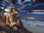 wolf by the sea