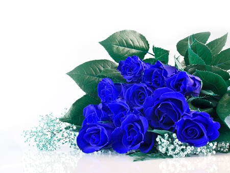 Blue Roses - photo, roses, bunch, blue