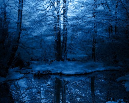 Ever Secluded in Blue - snow, woodland, night, blue, forest, ever, trees, reflections, nature, pond, water, forests, winter, ice, photography, secluded, reflection