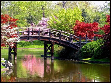 Spring Time Beauty - flowers, grass, bridge, water, trees, reflection, spring, park, plants, blossoms, bushes, rocks