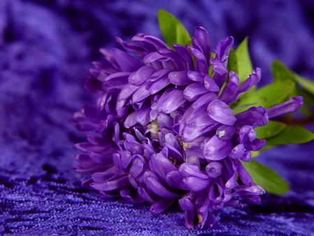 Purple flower on dark blue background flowers nature background purple flower on dark blue background mightylinksfo