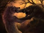 """wolf fight!!!"""
