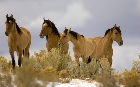 four horses - animal, photography, horse, nature, wild