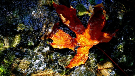 The Floating Leaf - leaf, water, fall, sun, rocks, sunshine, maple, autumn, oak, firefox persona, pacific northwest, bright