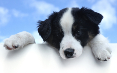 Black And White Cute Dog Dogs Animals Background Wallpapers On Desktop Nexus Image 832190