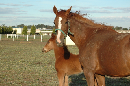 Wonderful Parent - pretty, brown, ponies, foals, beautiful, foal, gelding, horse, horses, cute, stallion, boy, girl, pony, awesome, mare