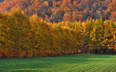Colourful Forest - forest, fall, autumn, leaves, colour, sky, field, meadow