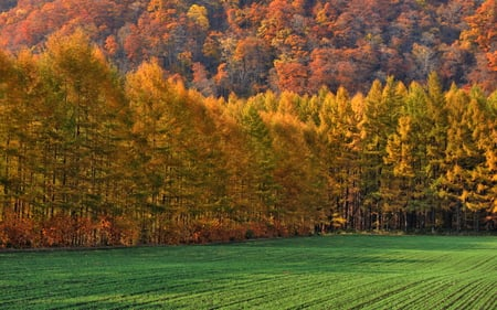Colourful Forest - autumn, forest, meadow, colour, sky, field, fall, leaves