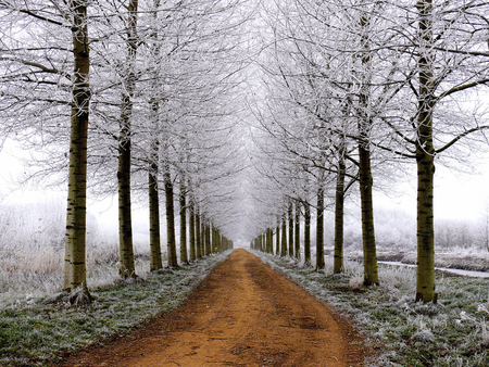 winter garce - foggy, trees, fog, winter, path, nature, way, road, white