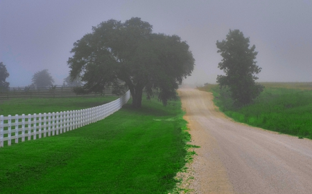 ALONG THE MISTY ROAD - fences, landscapes, nature, trees, mists
