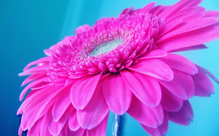 Hot pink flowers nature background wallpapers on desktop nexus hot pink flower photography pink close up mightylinksfo