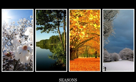 4 Seasons Other Nature Background Wallpapers On Desktop