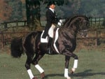 Donnerhall-Dressage