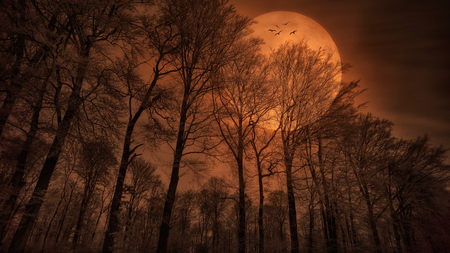 Mega Moonglow - red, moon, dark, moonlight, trees, huge, sky, night