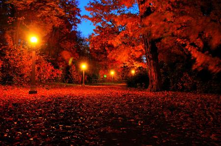 Autumn In Night Other Nature Background Wallpapers On Desktop Nexus Image 837982