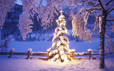 Snowy Christmas Tree - forest, christmas tree, christmas, snow, mountains, spotlight, foothills, lights