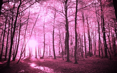 enchanted forest forests nature background wallpapers on desktop