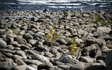 Stones at beach - beach, stones