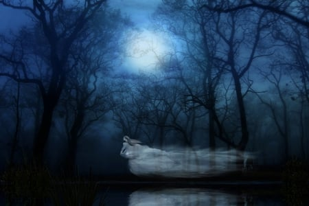 The ghost in forest - forest, fantasy, ghost, dark, magic, trees, woman, fullmoon