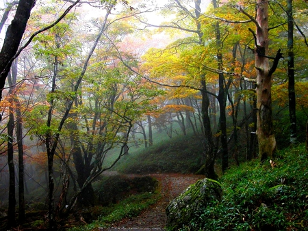 FOREST PATH - path, forest, winding, autumn