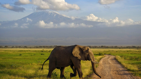 Elephant Crossing - beauty, landscape, road crossing, clouds, field, elephant, mountain