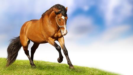 Hermosocaballonobleanimal Horses Animals Background