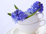 Pretty Lavender