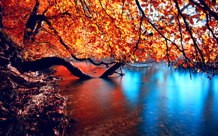 Simply Beautiful - fall, red, limb, pretty, colorful, autumn, autumn leaves, branch, natura, photography, leaves, splendor, beauty, river, sagging, reflection, yelo, wood, blue, lovely, view, colors, trees, lake, tree, water, autumn colors, peaceful, nature