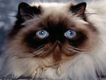 Mr. Blue Eyes